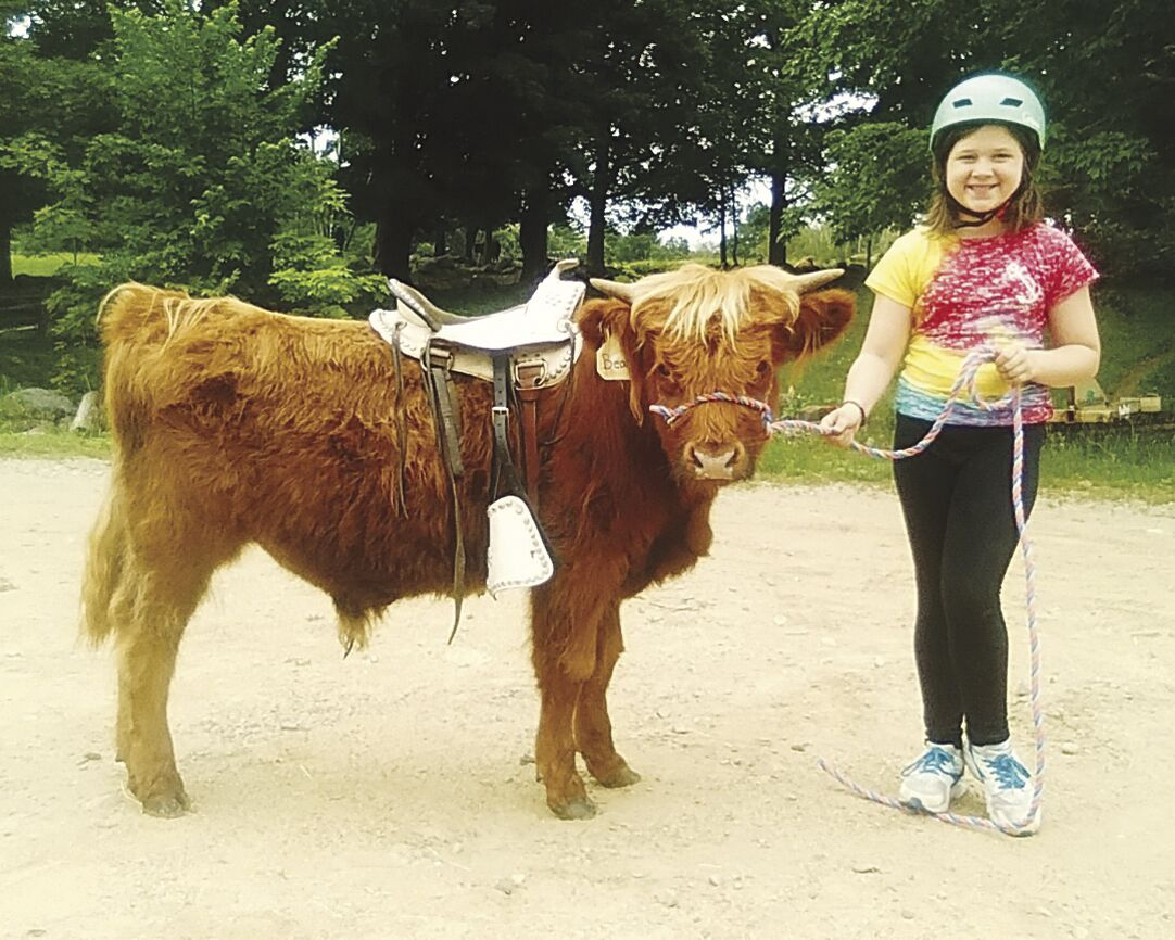 Learning how to work oxen
