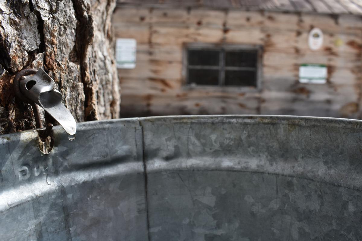 03-23 Maple Weekend sap
