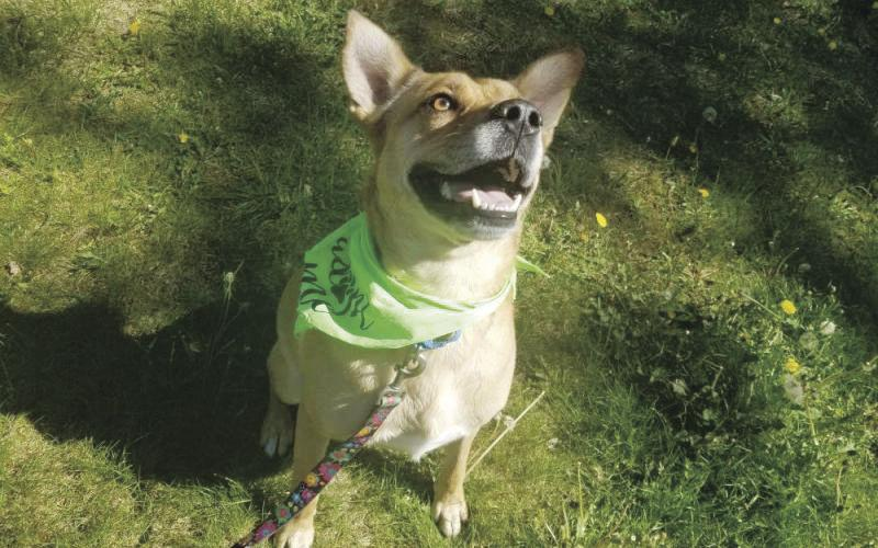 NH Humane Society Pet of the Week: Chance