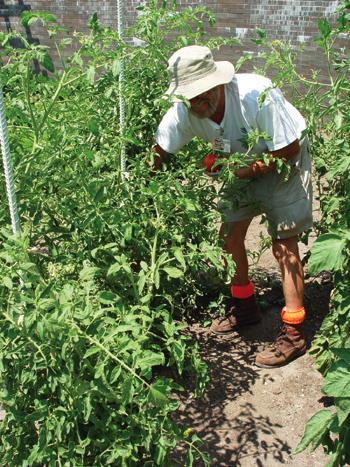 LN Gardening