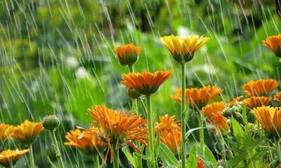garden-rain-590.jpg