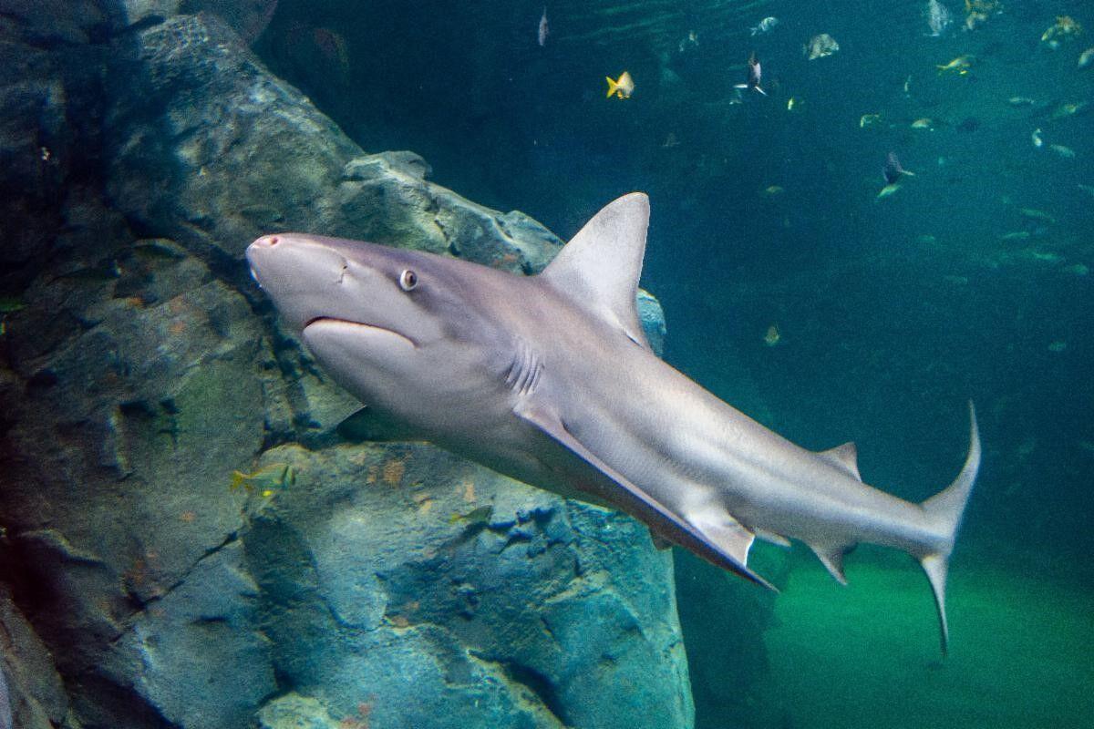 shark week.jpg