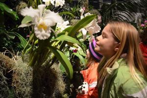 Missouri-Botanical-Garden-Orchid-Show.jpg