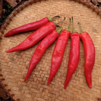 Hong-Gochu-Large-Fruit-Hot-Pepper-1.jpg