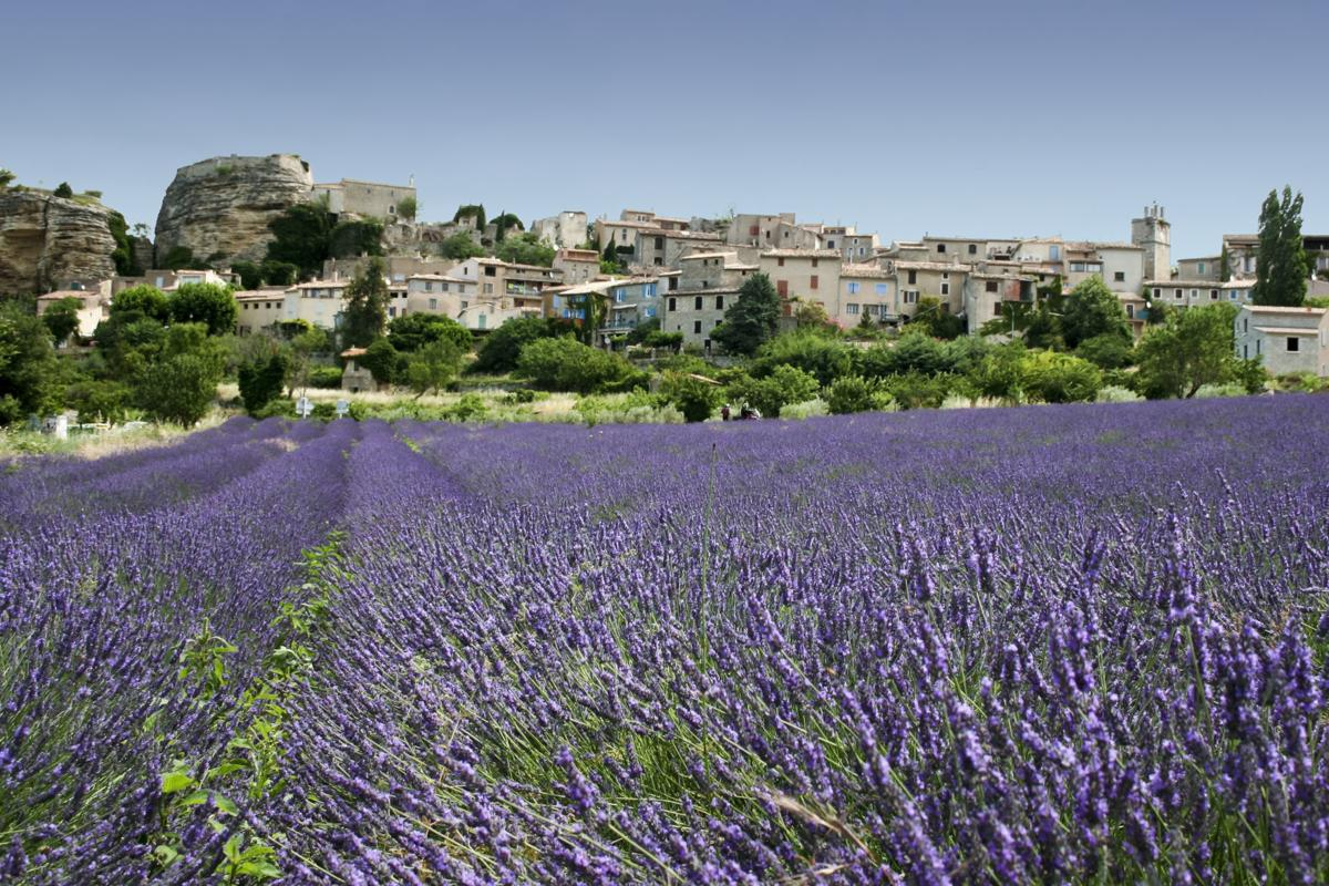 lavender fields old hill town provence france