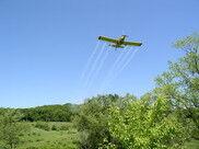 Gypsy moth spraying to start
