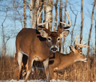 Advisory team meeting regarding chronic wasting disease in Eau Claire County to be held July 16 in Rock Falls