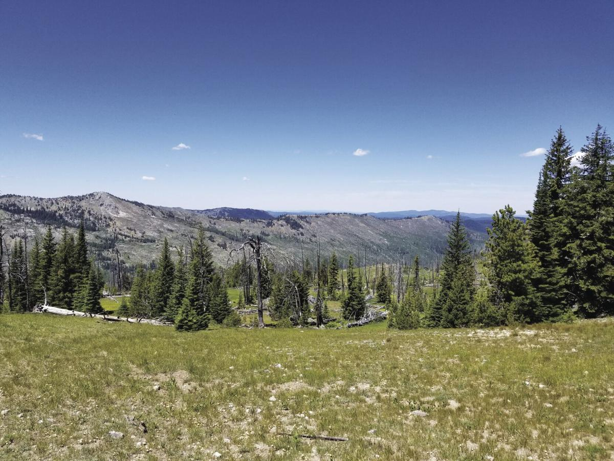 Peavy Trail 1.jpg
