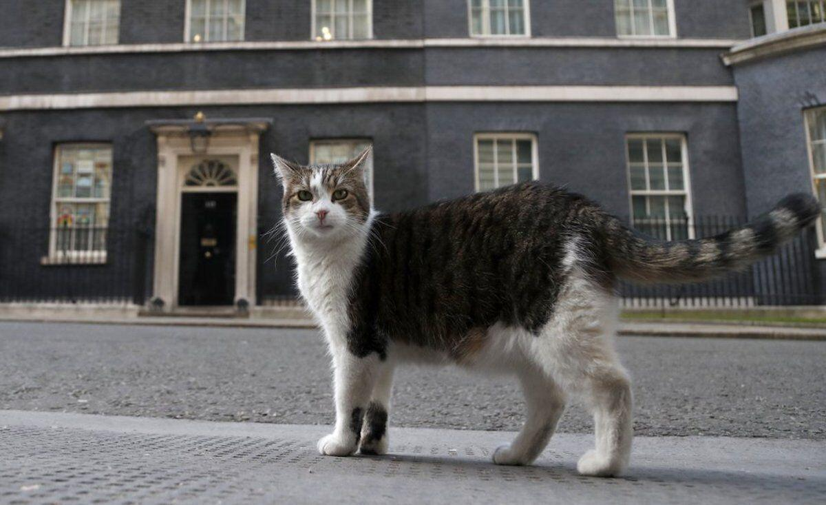 Larry, the official 10 Downing Street cat.jpg