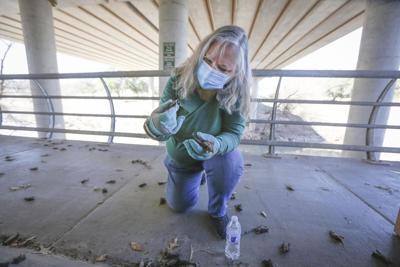 Diana Foss, Texas Parks and Wildlife Urban Wildlife Biologist.jpg