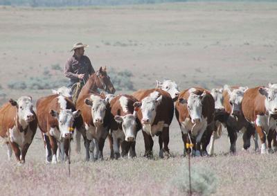 200925_cp1_news_dj diamond m ranch