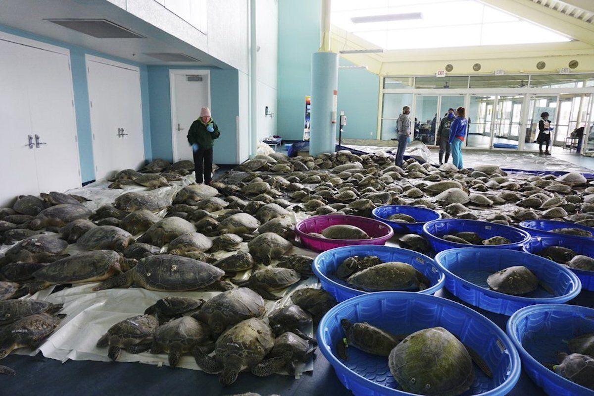 rescuing sea turtles.jpg