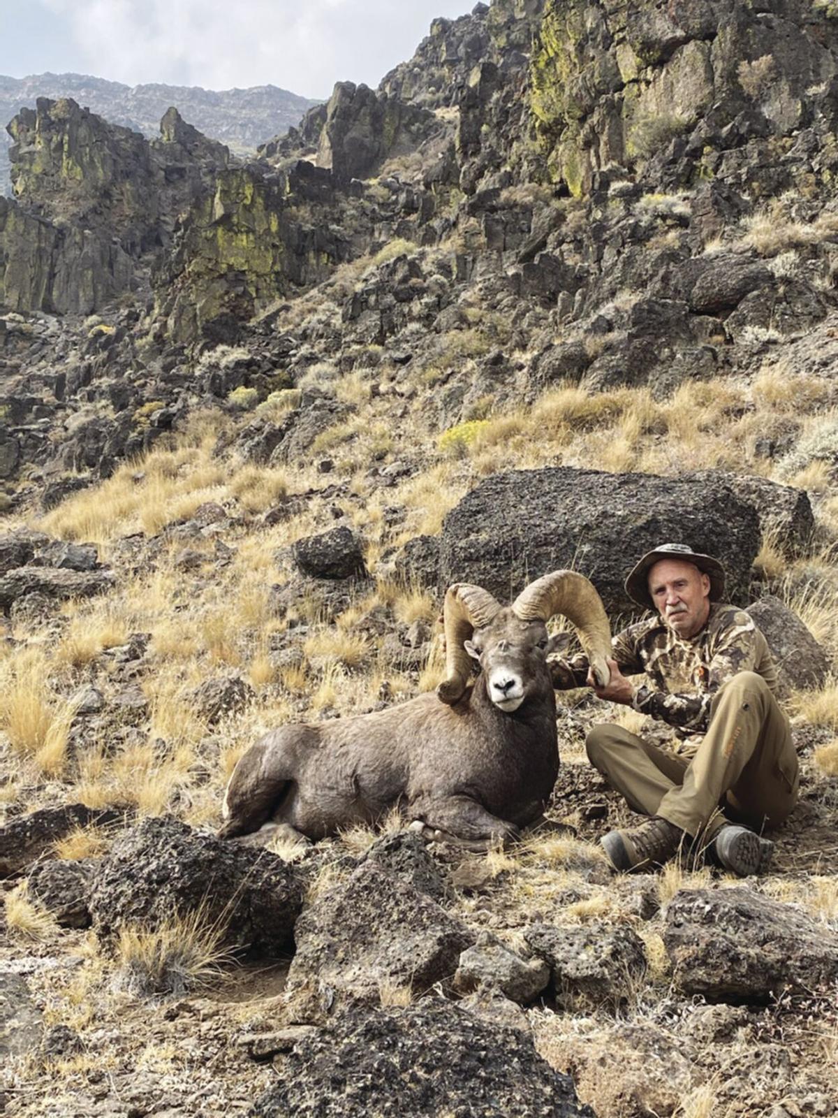 Sheep hunt 2.jpg