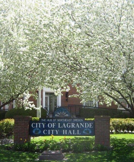 City Hall Bloom