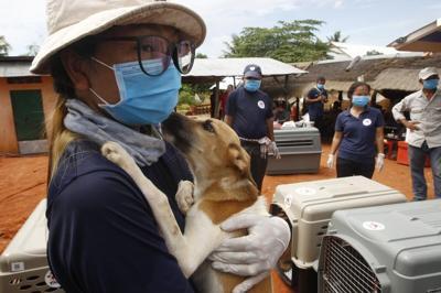 Cambodia dog rescue.jpg