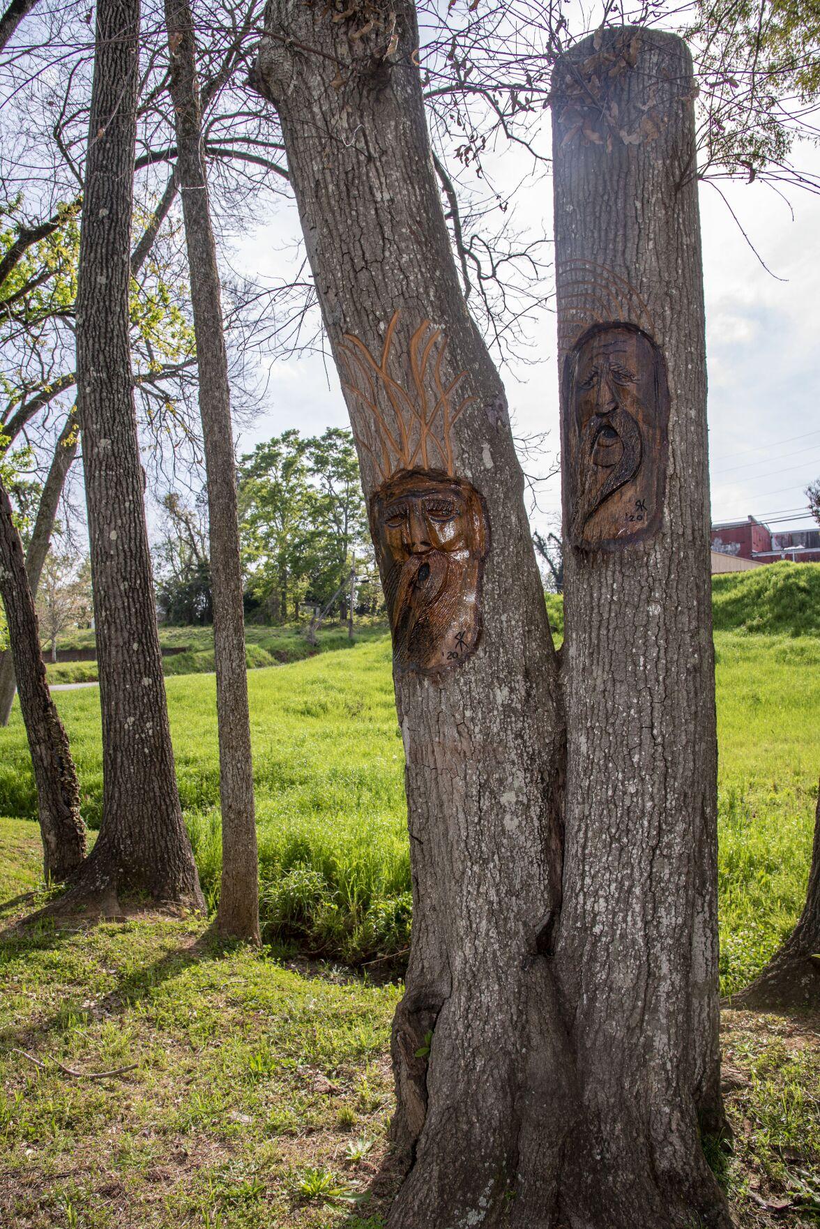 Pennington Park trees.tif