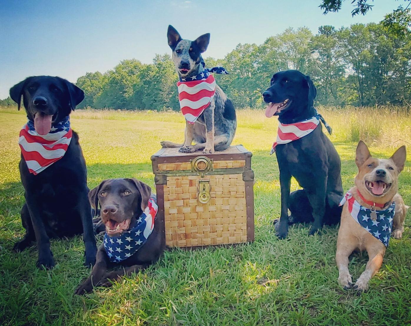 Patriotic Dogs.jpg