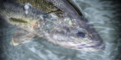 The Art of Hooking Fish