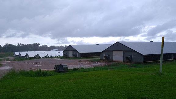 CAFO area upstream of Lake Martin