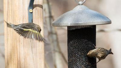 Don't take up your feeders