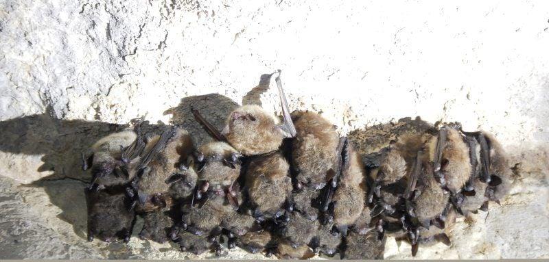 bat conservation01.jpg