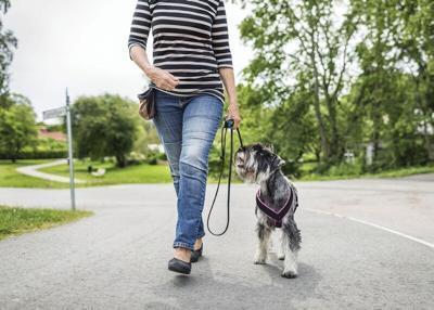 Walking-dog.tif