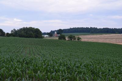 LF20190629-Gruber-Corn-1.JPG
