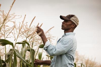 minority farmers