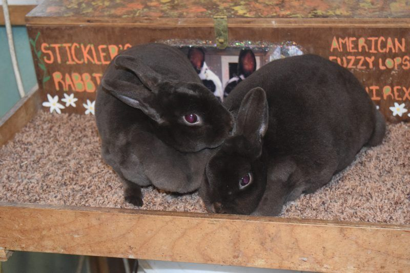 LF20210403-Rabbits2-4.jpg