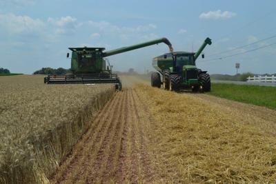 LF20210710-Wheat-GishFarms2.jpg