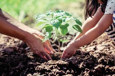 Planting a tree.tif