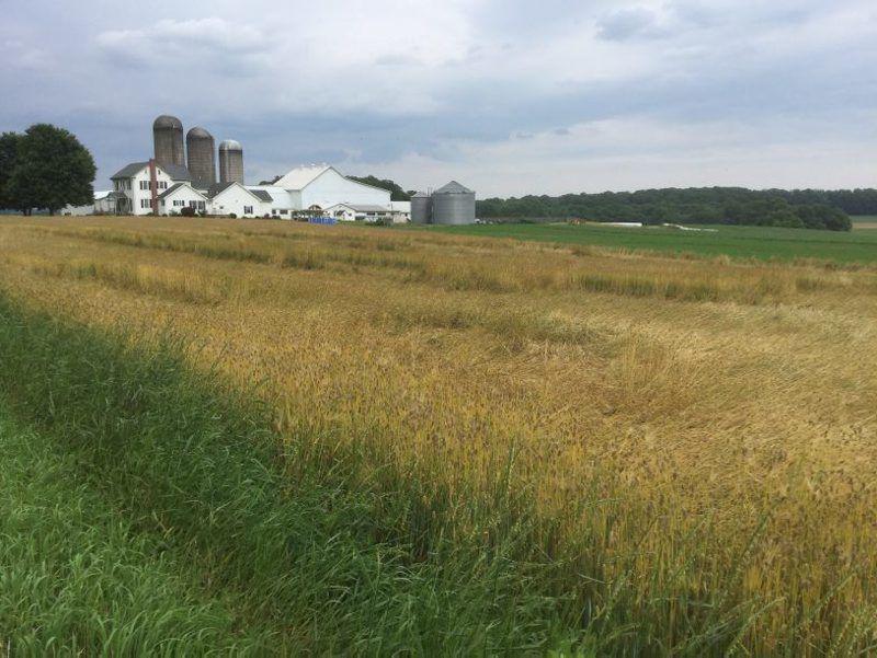 Glennview-Farms-2.jpg
