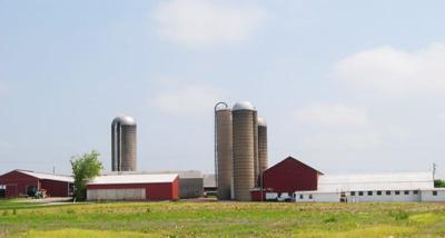 Brookway-Holsteins-2.jpg