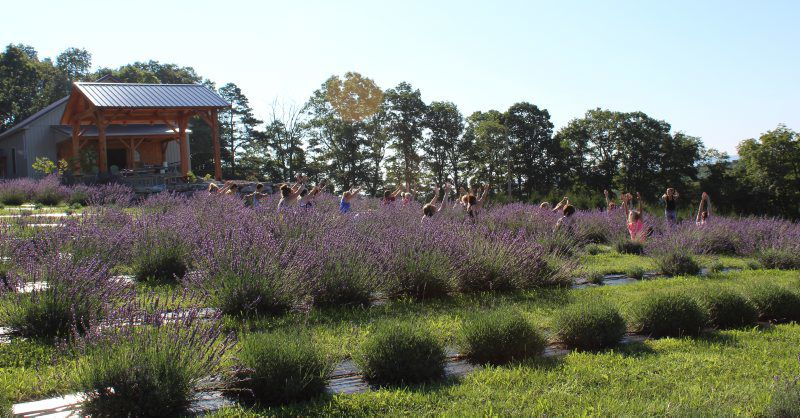 Hope Hill Is All About The Bloom The Latest In Agritourism