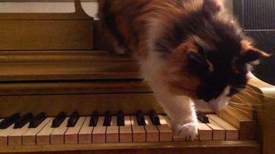 cat-piano1400-789.jpg