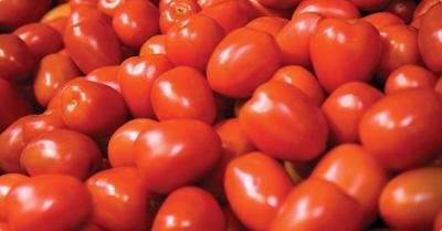Tomato Sauce Time