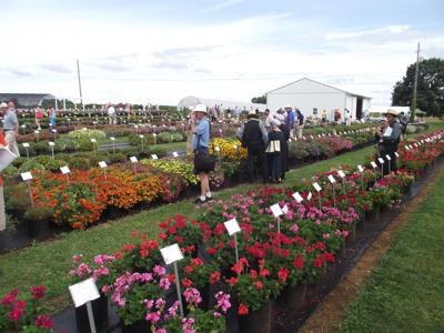 After the Rain Comes the Flowers: Landisville Research Farm Hosts Crowd, Discusses Flower Trials