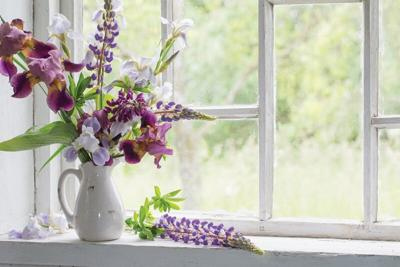 purple-flowers.tif