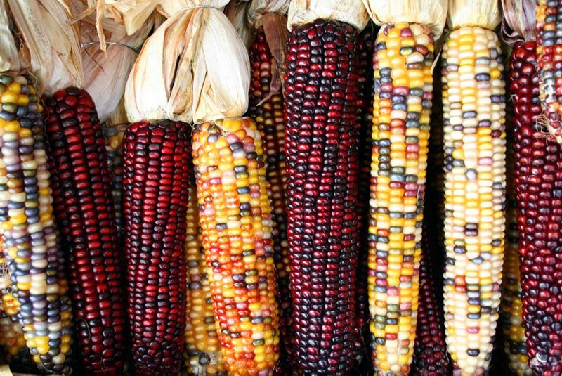 Breathing New Life Into Native American Crops | Antiques & History |  lancasterfarming.com