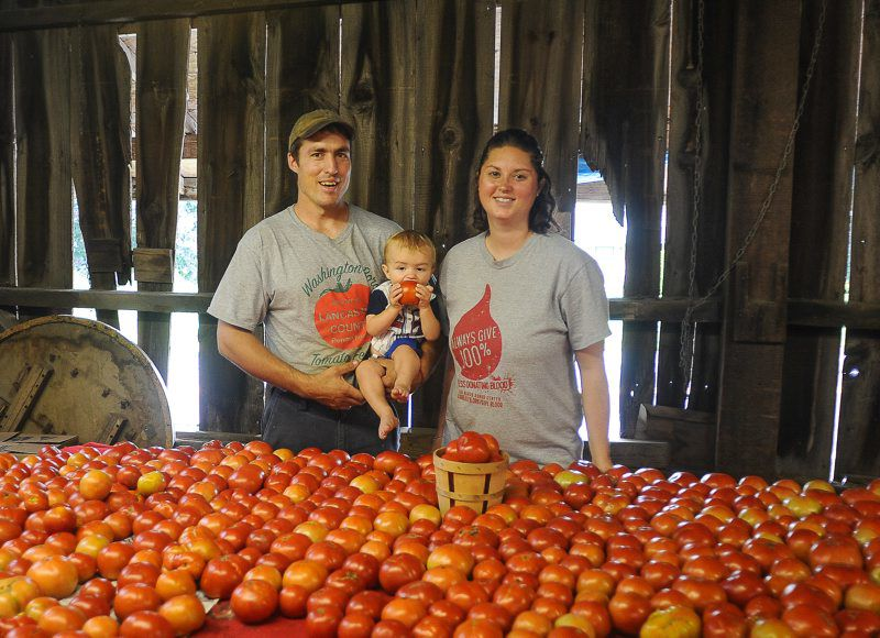 Tomatoes-3.jpg
