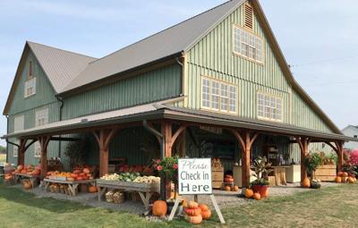LF20210828-green berry farm.jpg