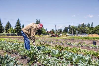 manure-contamination-crops.tif