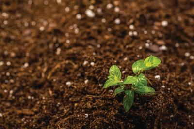 soil-with-seedling.tif
