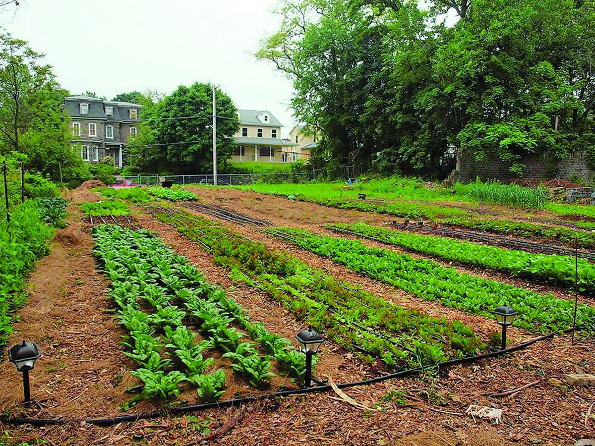 Urban Entrepreneur Takes Farming Seriously