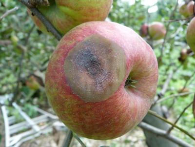 LF20180915-Apples-1.jpg