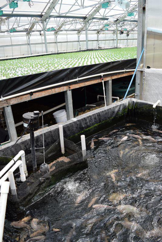 Cheyney-Aquaculture-010.jpg