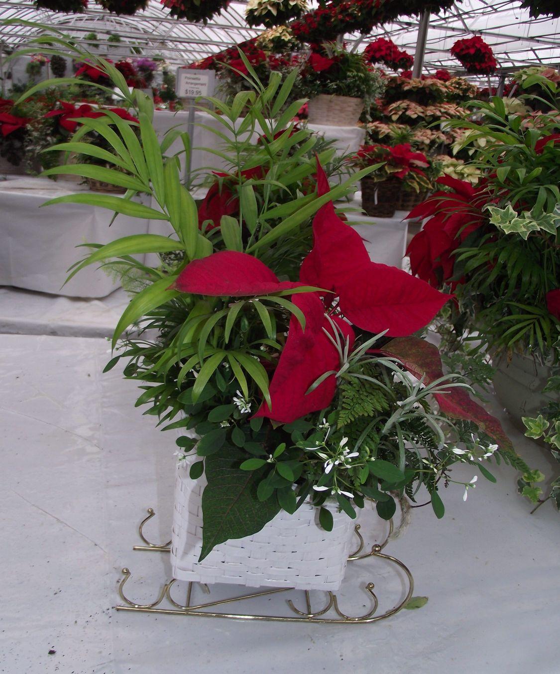 Frysville Farms Has The Christmas Spirit The Heart Of