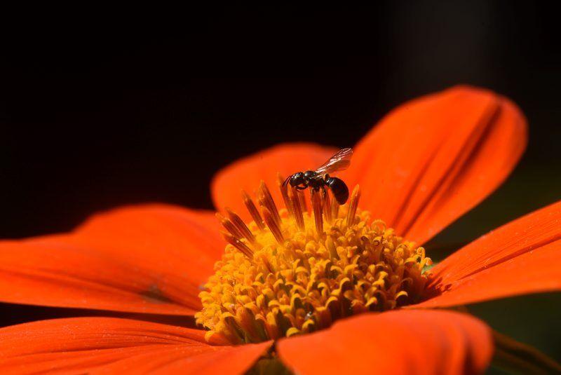 pollinator-fall-5.jpg