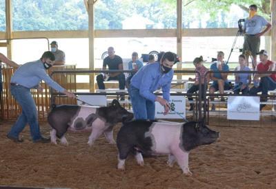 LF20200808-Leb-Fair-Pigs-6.jpg (copy)