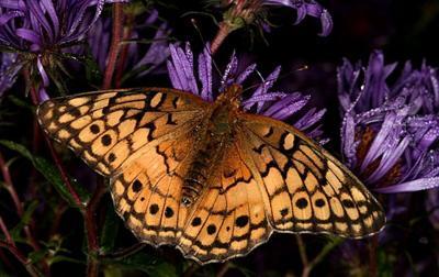 pollinator-fall-2.jpg